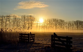 Sunrise, field, trees, fence, fog