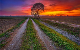 Sunset, fields, road, trees, dusk