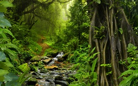 Preview wallpaper Thailand nature landscape, tropical forest, trees, green, stones, creek