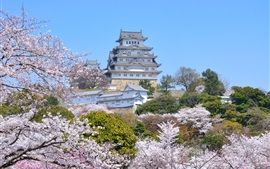 Preview wallpaper Travel to Himeji City, spring, sakura blossoms, Japan