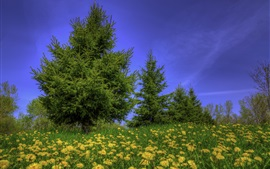 Trees, grass, wildflowers, blue sky