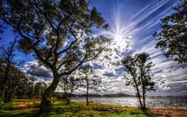Preview wallpaper Trees, lake, sun rays