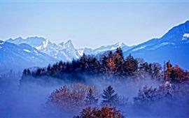 Trees, mountains, autumn, fog, dawn