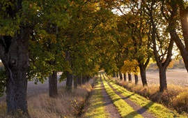 Preview wallpaper Trees, road, path, grass, nature, field