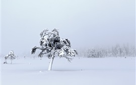 White world, thick snow, trees, winter