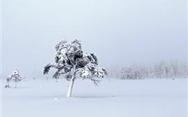 Mundo branco, neve espessa, árvores, inverno