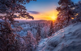 Preview wallpaper Winter, forest, snow, sunset, sun rays