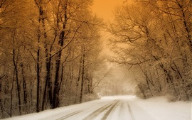 Preview wallpaper Winter, snow, trees, road, dusk