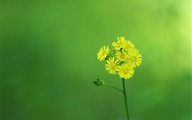 Preview wallpaper Yellow little flowers, inflorescence, stem, green background