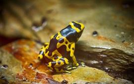 미리보기 배경 화면 노란 개구리 개구리
