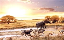 Africano, animais, elefante, zebra, veado, árvores, pôr do sol