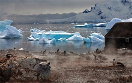 Preview wallpaper Antarctica icebergs, coast, penguins, fog