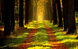 Preview wallpaper Autumn forest, path, grass, sun rays
