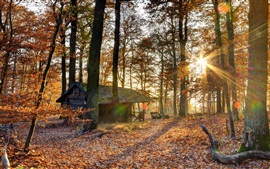 Autumn, forest, sun rays, hut
