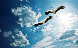 Preview wallpaper Bird two cranes flying in the sky, clouds