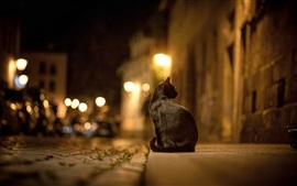 Preview wallpaper Black cat at street night