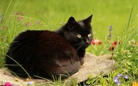 壁紙のプレビュー 黒い猫は休息を取る