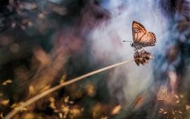 Papillon, herbe, fond flou