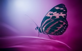 Butterfly, wings, purple petals