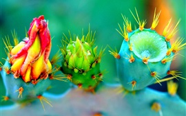 Preview wallpaper Cactus three different flowers