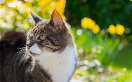 Cat look back, yellow eyes, flowers, glare
