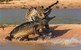 Preview wallpaper Crocodile and jaguar hunting