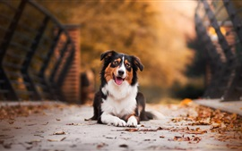 Cute dog sit on the ground, leaves, autumn