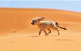 미리보기 배경 화면 귀여운 여우는 사막에서 산책