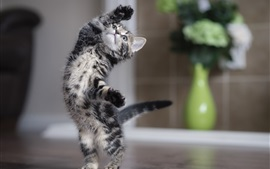 Preview wallpaper Cute kitten dancing