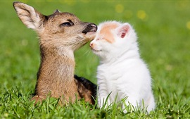Preview wallpaper Deer and kitten, friends, grass