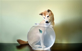 Preview wallpaper Dog look at aquarium fish