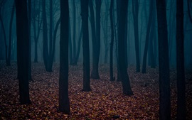 Preview wallpaper Dusk, forest, trees, fog, leaves