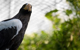 Preview wallpaper Eagle look back, head, beak