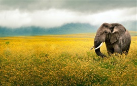 Elephant walk in the flowers
