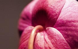 Preview wallpaper Flower macro photography, pink petals
