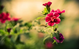 Preview wallpaper Flowers photography, red petals, bokeh