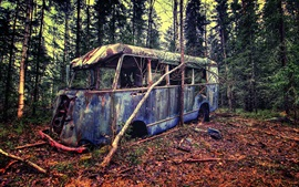 Forest, broken bus