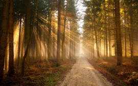 Preview wallpaper Forest, path, trees, golden sun rays