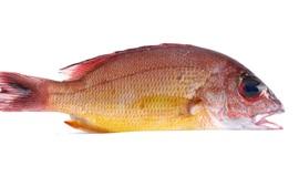 Fresh fish, white background