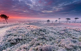 Frost, grass, trees, clouds, sunrise