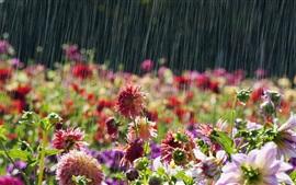 Flores de jardín, lluvioso