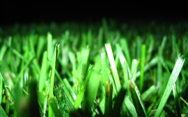 Preview wallpaper Grass, green leaves, plant photography