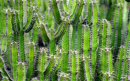 Preview wallpaper Green cactus, thorn