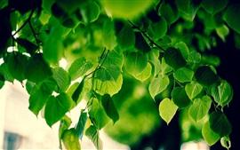 Зеленая листва, свежий воздух