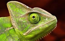 Verde, iguana, cabeça, close-up, olho