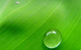 Green leaf, dew, macro photography