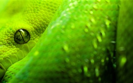 Preview wallpaper Green snake close-up, eye