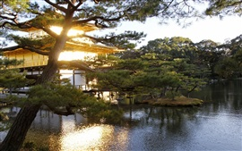 Japan, garden, trees, pond, sunshine