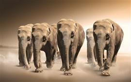 Muitos elefantes caminham