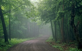 Preview wallpaper Morning, forest, trees, road, fog